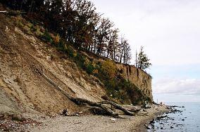 """Rezerwat Kępa Redłowska - Gdynia [Ochrona przyrody]<br><a href=""""?s=nadmorskie-poi&o=we&id_kat=54&id_m=37&id=797"""">pokaż szczegóły punktu...</a>"""