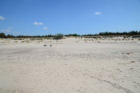 """Czarny szlak do jeziora Gardno [Wejścia na plażę]<br><a href=""""?s=nadmorskie-poi&o=we&id_kat=13&id_m=0&id=1164"""">pokaż szczegóły punktu...</a>"""