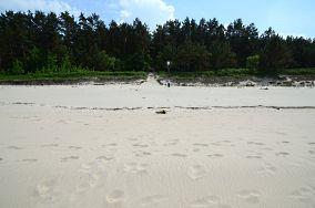 """38 - Krynica Morska [Wejścia na plażę]<br><a href=""""?s=nadmorskie-poi&o=we&id_kat=13&id_m=91&id=2739"""">pokaż szczegóły punktu...</a>"""